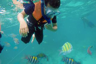 lots of fish - Snorkelling on Krabitrek Phi Phi speedboat tour