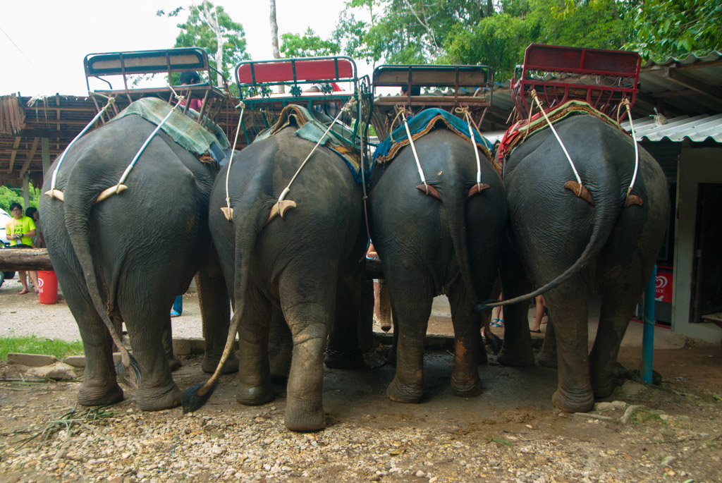 Krabi Elephant Ride