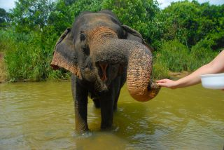 Take a bath with an elephant in Krabi