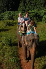 Elephant Riding in Krabi