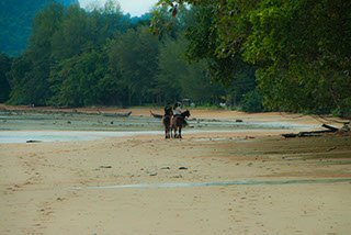 horse-riding-on-beach-krabi